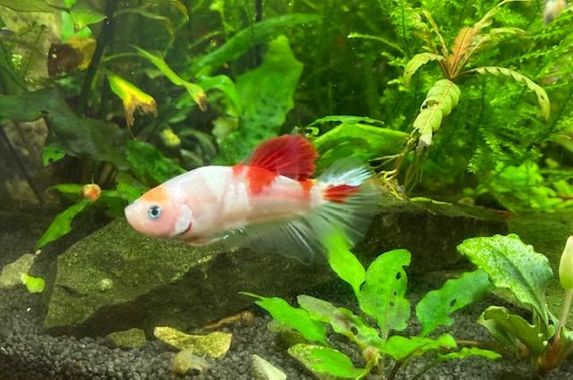 Fisch ohne Name